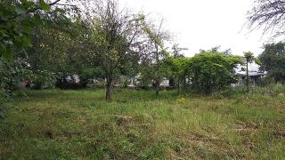 The plot is rectangular 20*30 m Located in Nova Ukrainka